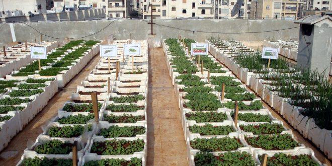مزارع مائية أسطح المنازل لتحسين