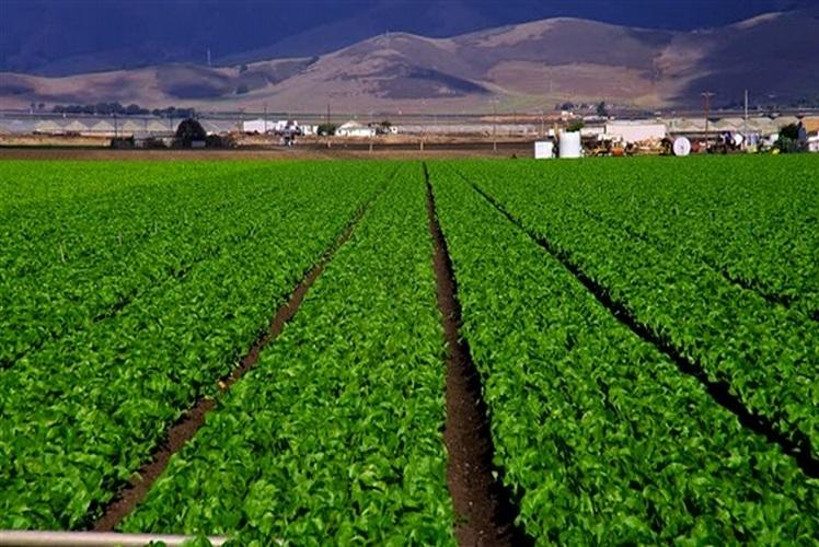 صورة زراعة البحيرة تنفذ حملة قومية لزيادة محصول البرسيم