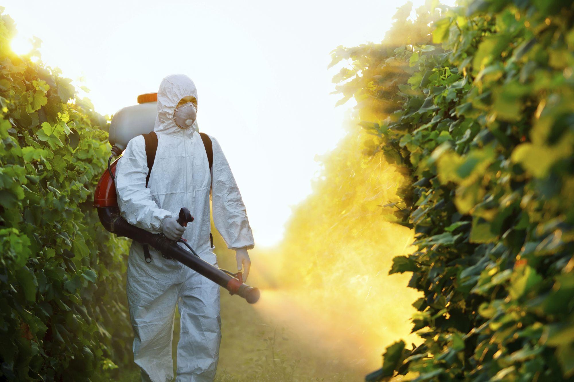 صورة الدكتور محمد عبدالمجيد : حجم المبيدات المغشوشة فى مصر يتراجع لـ14%