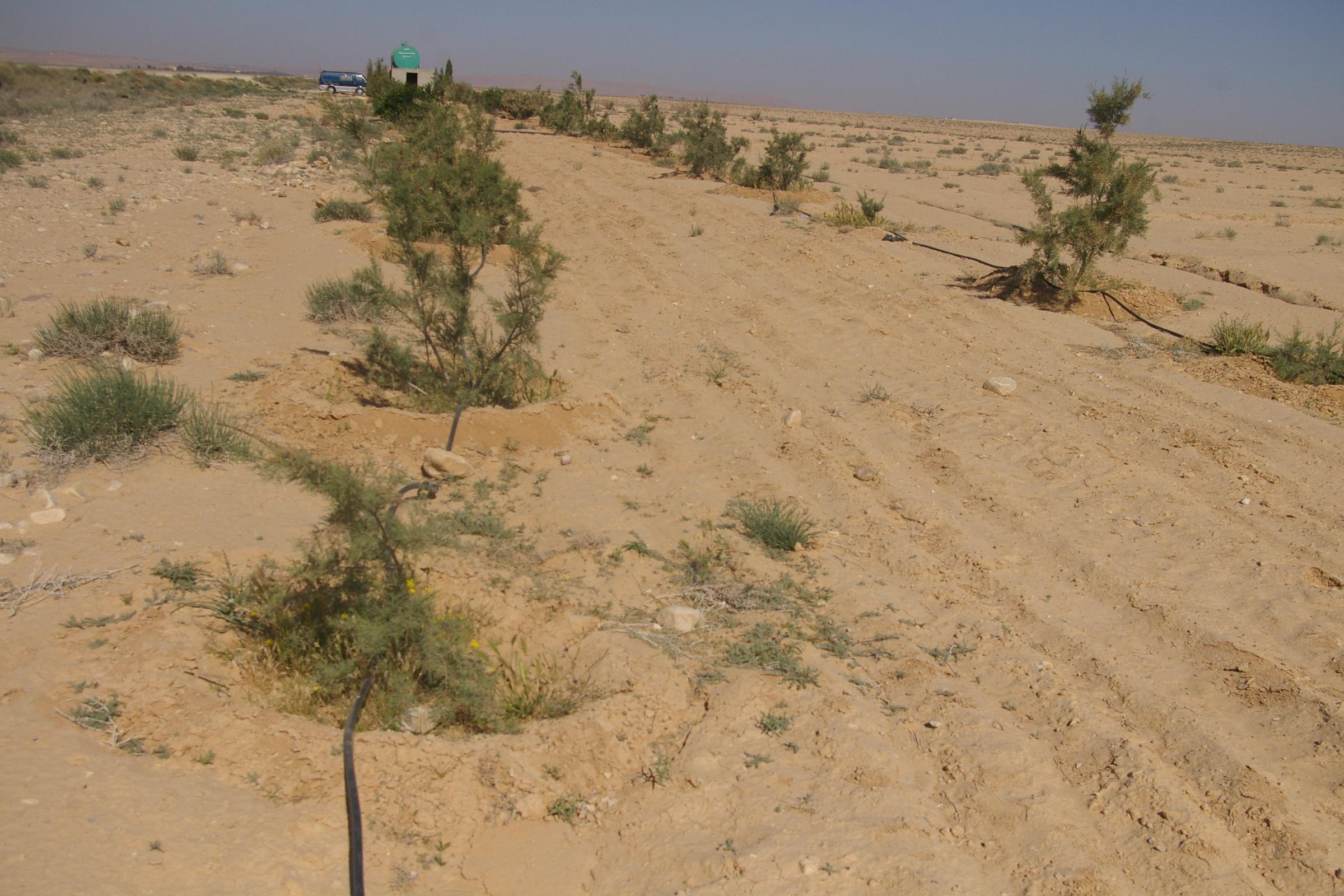 صورة مشاكل الأراضي المصرية وطرق التغلب عليها