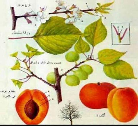 صورة أعراض نقص العناصر على أشجار الخوخ والنكتارين