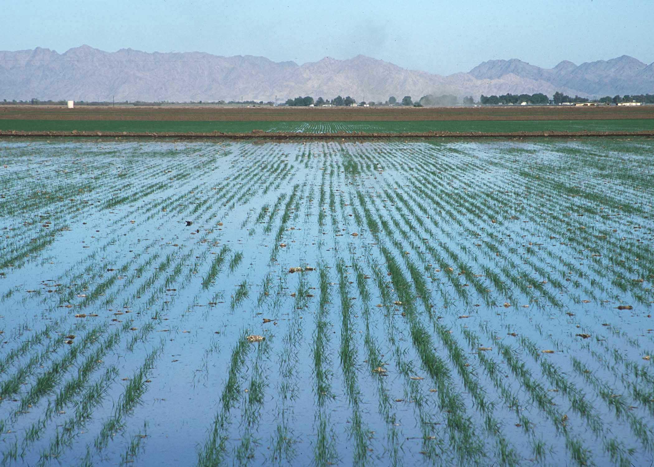 صورة 3.9 % انخفاض في كمية مياه الري المستخدمة في الزراعة عام 2015