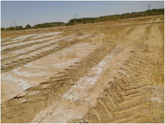 صورة الجديد في استصلاح الأراضي المتأثرة بالأملاح Salt affected soils