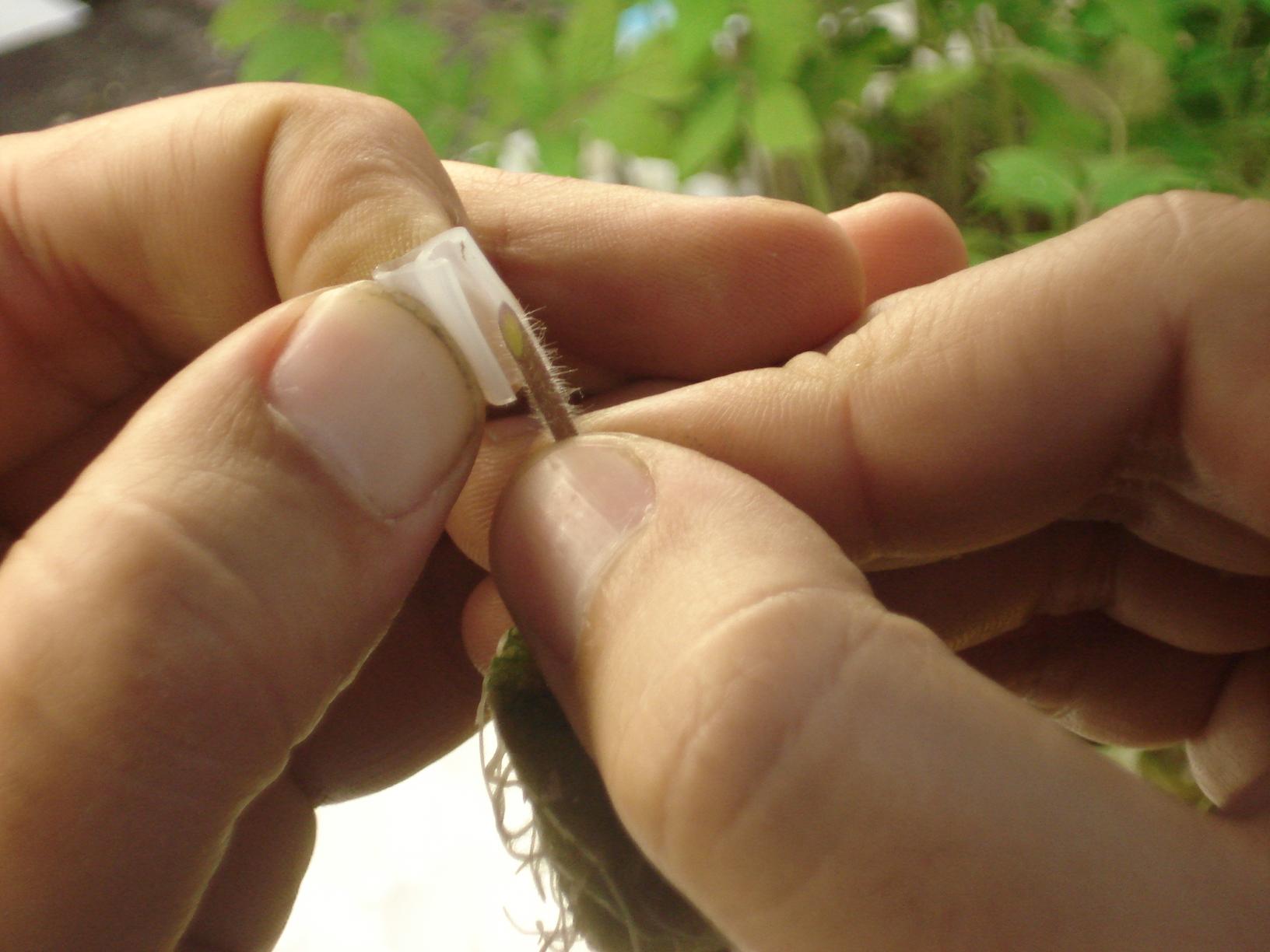 صورة 10 سنوات على تطعيم شتلات الخضر في مصر