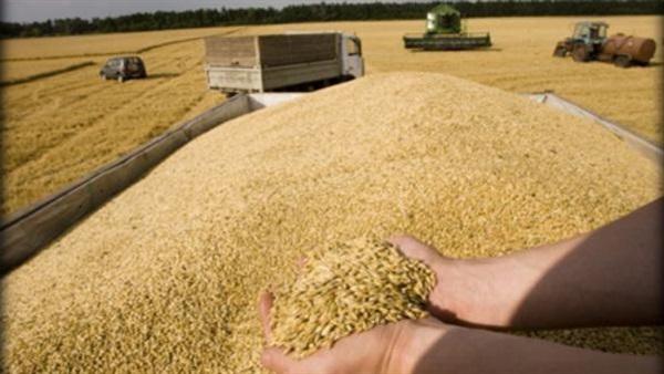 صورة ممدوح حمادة يطالب برفع سعر إردب القمح لـ600 جنيه