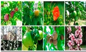 صورة اسباب تساقط الأزهار والثمار من أشجار الفاكهة