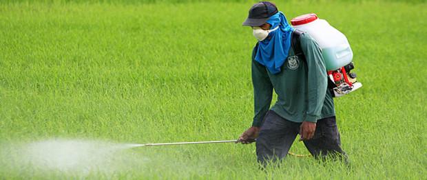 صورة العوامل التي تؤثر على كفاءة وفاعلية المبيدات