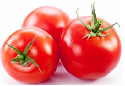 صورة اهم امراض الطماطم وعلاجها