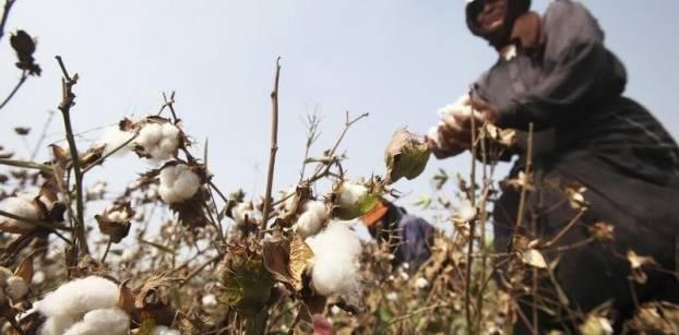 صورة * الأجندة الشهرية لأهم العمليات الزراعية للمحاصيل الحقلية: {شهر مارس (برمهات)}: