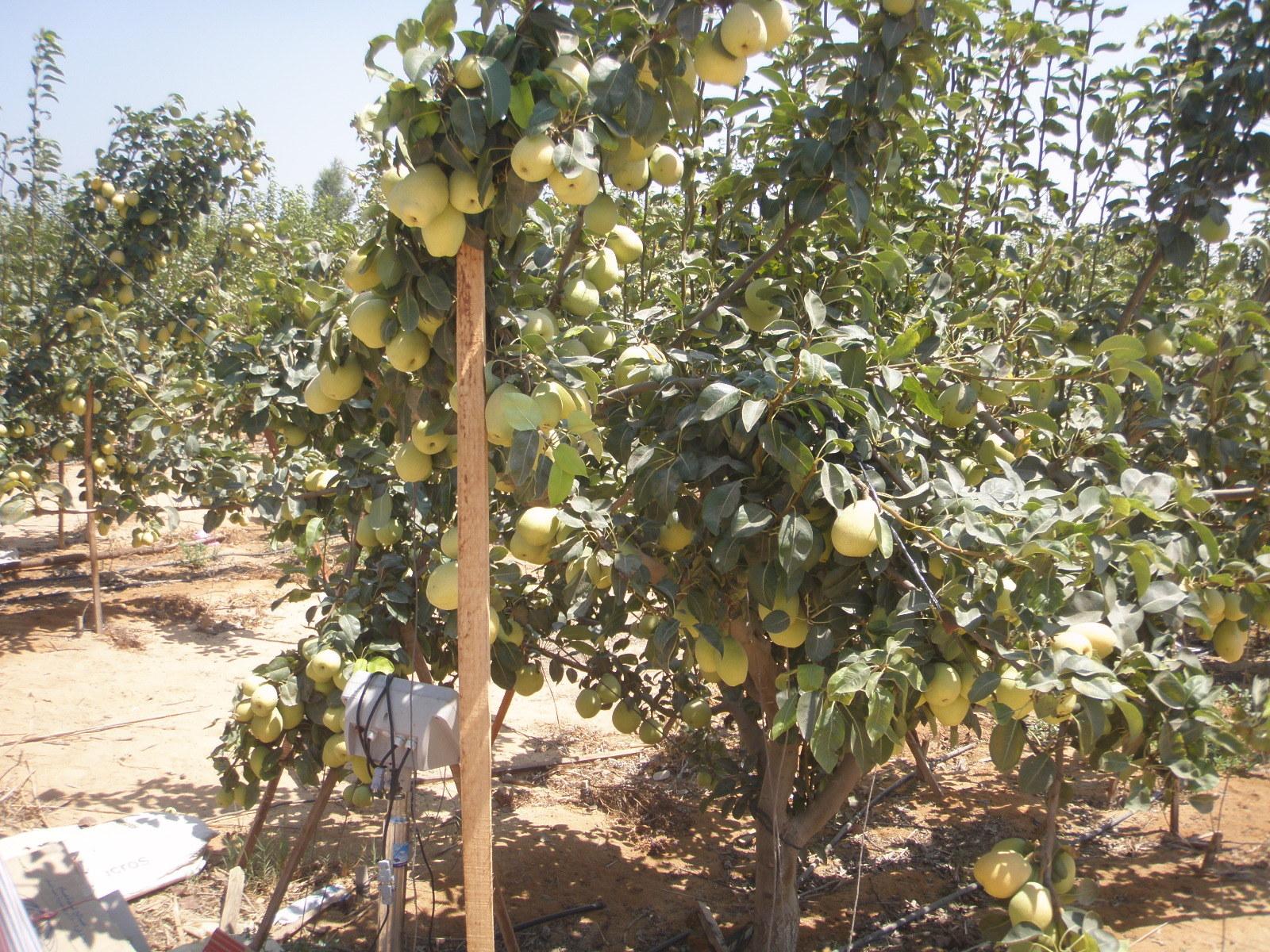 صورة أهم العمليات الزراعية التي تجُرى على بعض محاصيل الفاكهة والخضر خلال أشهر ابريل ومايو ويونية