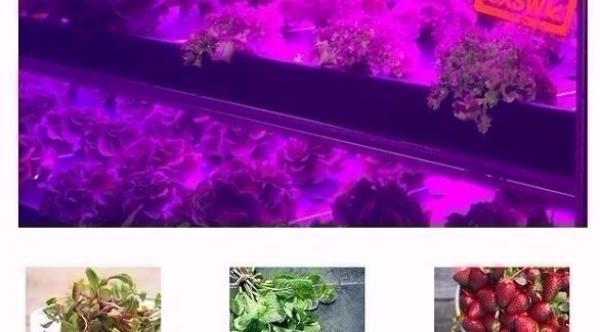 صورة مزرعة متنقلة تنتج محاصيل طازجة تعادل 5 أفدنة زراعية