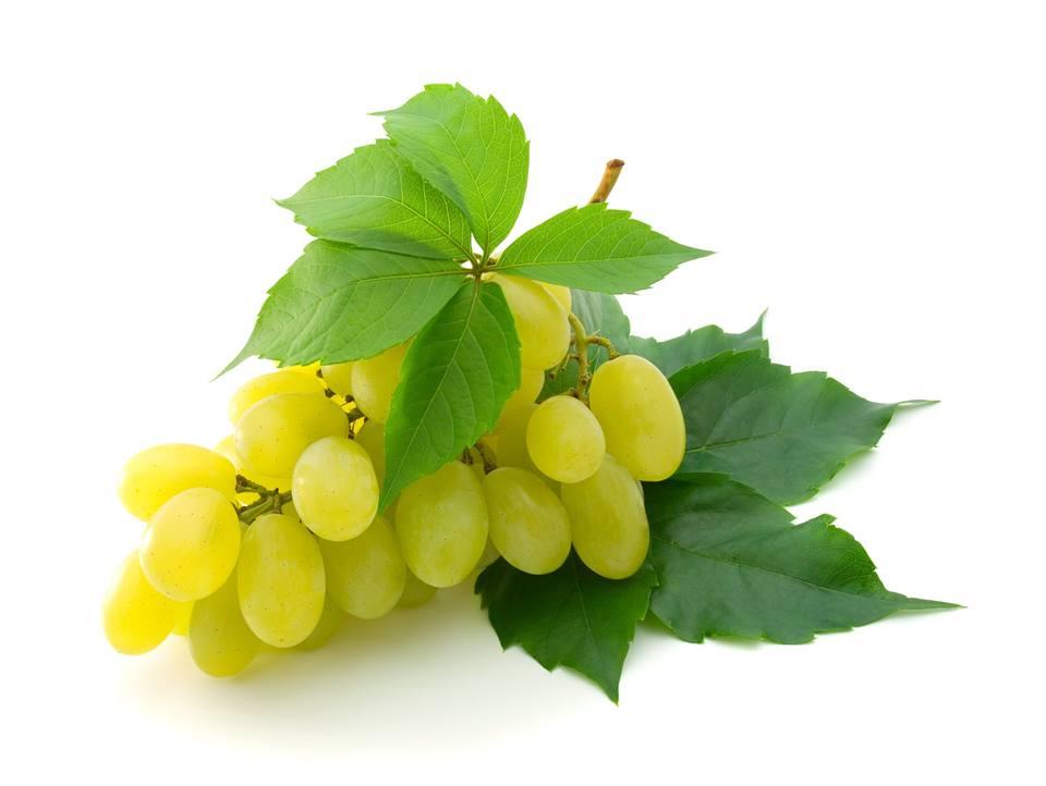 صورة التوصيات الفنية الشهرية لمزرعي العنب