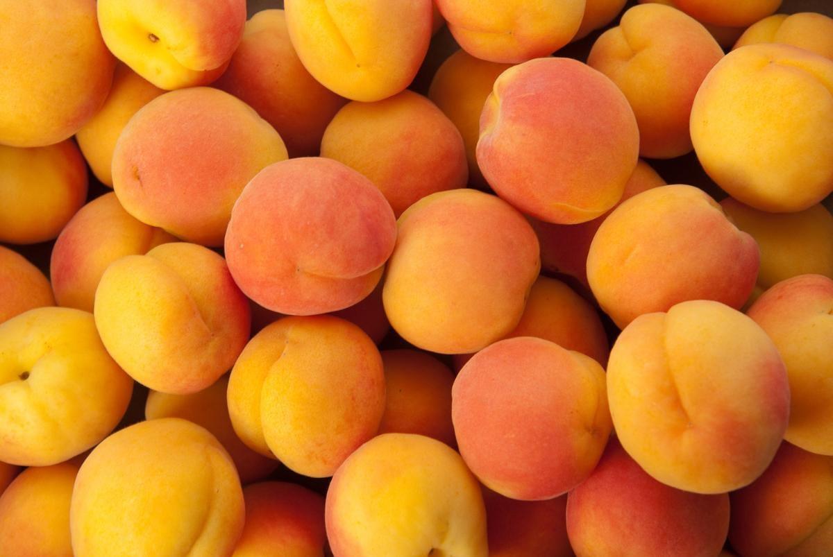 صورة التوصيات الفنية الشهرية خلال شهر يناير لمزارعي الفاكهة المتساقطة ( كمثري ـ خوخ ـ مشمش ـ برقوق ـ كاكي- التـــفاح ) .