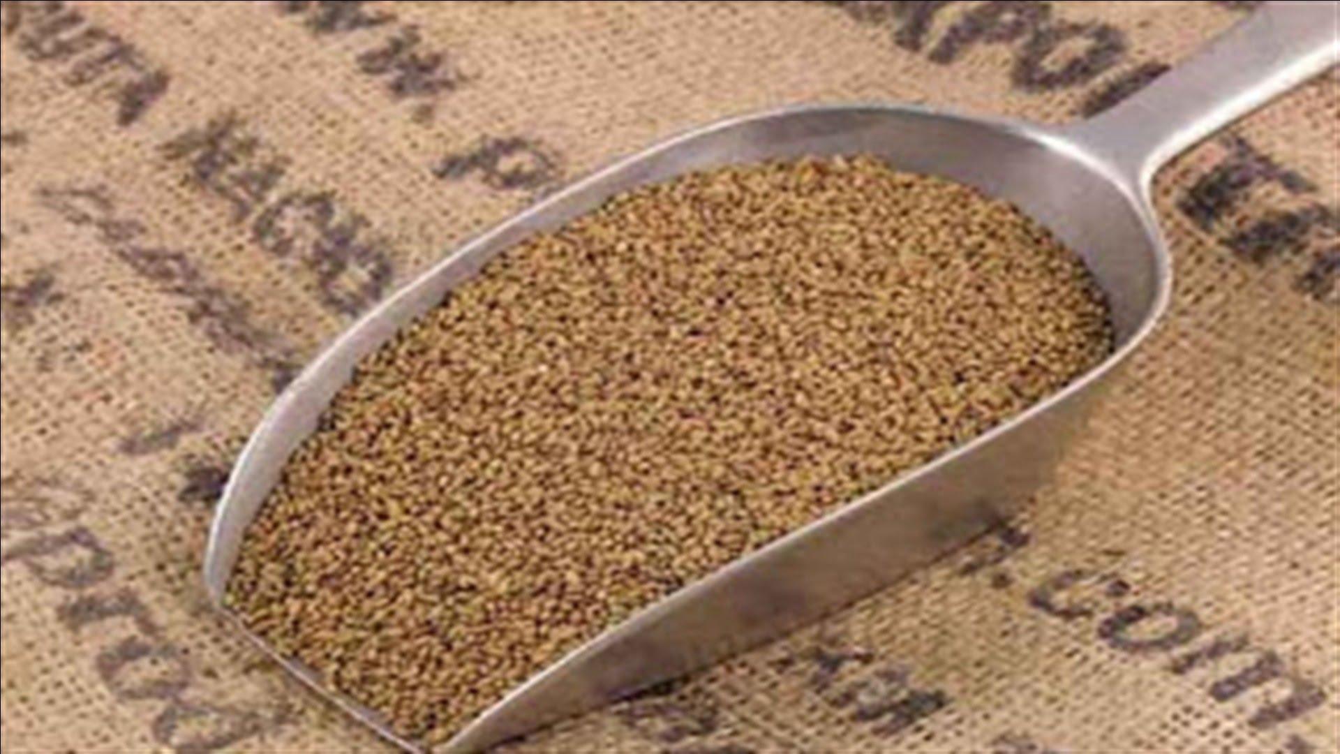 صورة تشمل أصنافا من الذرة والقمح والفول … تعرف على 53 صنفا من تقاوى المحاصيل الموفرة للمياه