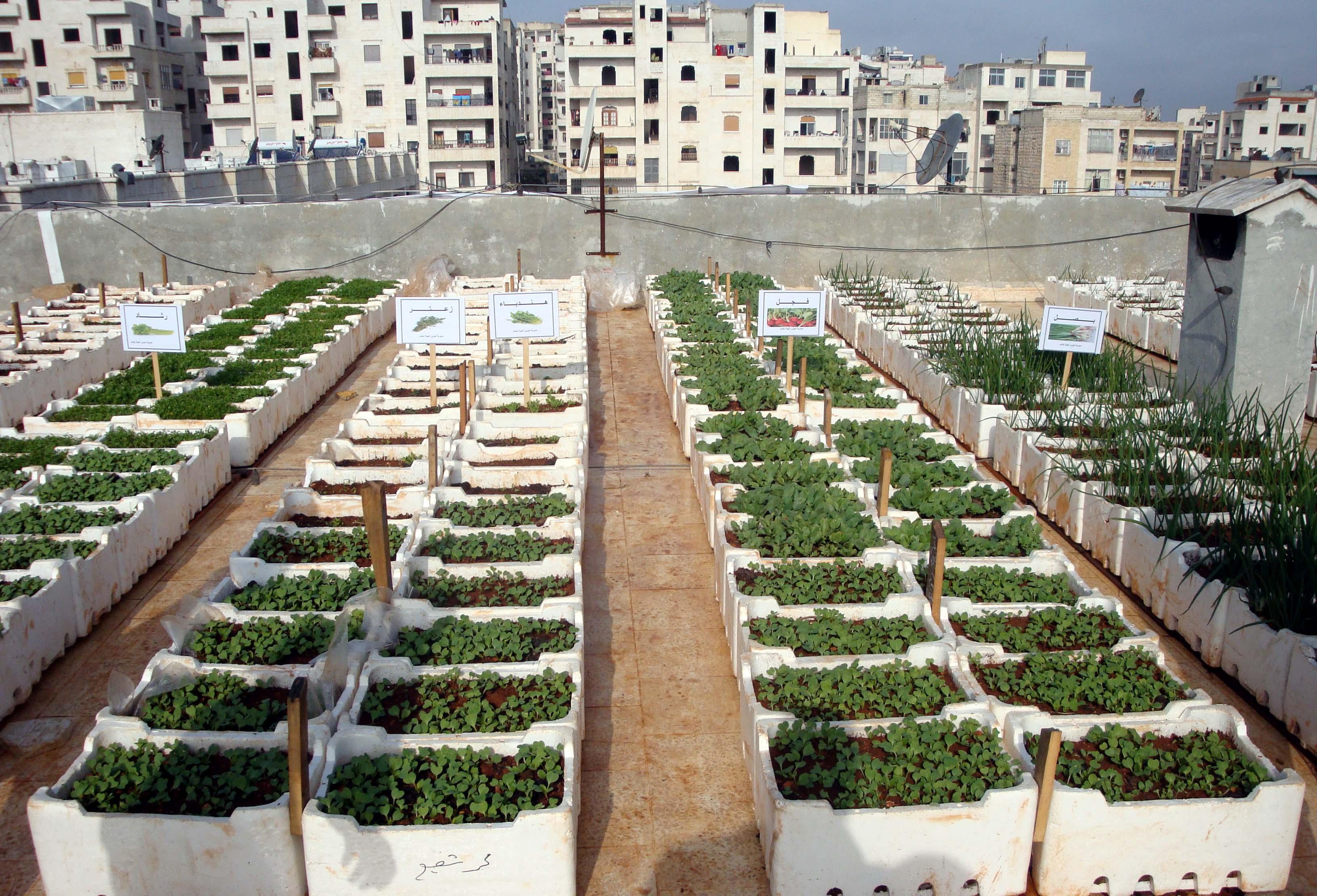 صورة مشروع قومي لإنشاء مزارع مائية فوق أسطح المنازل لتحسين البيئة وسد الفجوة الغذائية