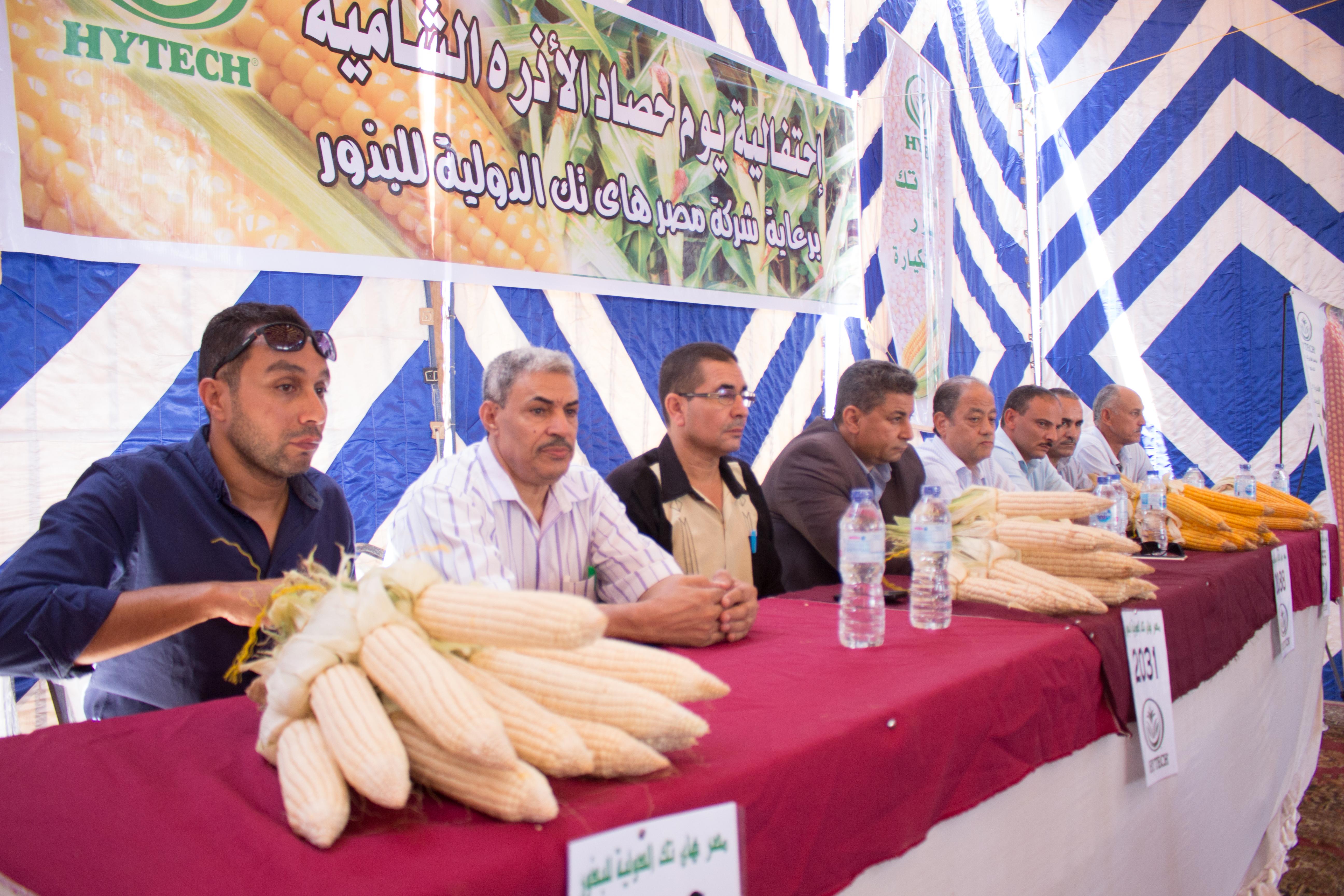 صورة بعد أن وجدوا الكنز في الشيكارة  حشود غفيرة من مزارعو الذرة يشاركون مصر هايتك الدولية إحتفالاتها بيوم الحصاد في محافظات مصر