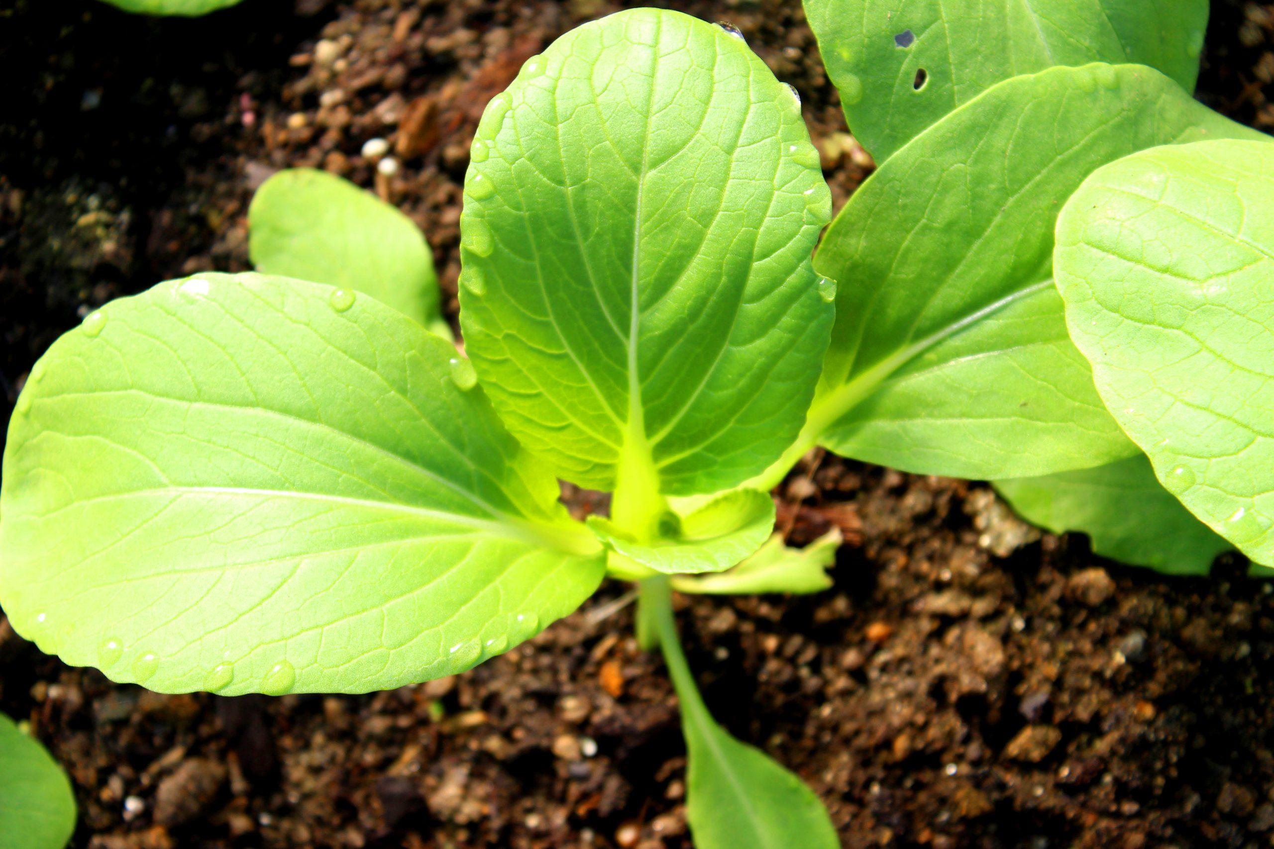 صورة دور عنصر السليكون في تحسين نمو ومقاومة النبات