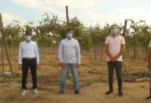 صورة اهم مشاكل و حلول محصول العنب فى موسم 2020 – الجزء الأول