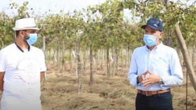 صورة اهم مشاكل و حلول محصول العنب فى موسم 2020 – الجزء الثانى
