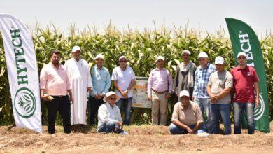 صورة مصرية 100 % …. مصر هاي تك تنظم يومين حقليين لأصناف الذرة السكرية الجديدة